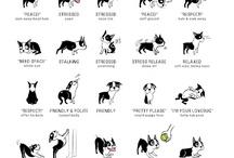 Kutyás cuccok - Doggie things