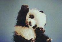 Cute Animals / #animals