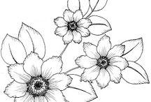 O-kvetiny