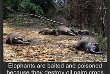 Killing Animals for Profit