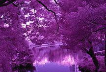 mi color favorito purpura