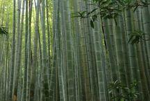 My Zen Style -禅-