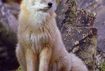 Lišky :o)