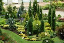 green planting