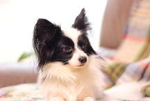 Cute my pet dog / Cute my pet dog