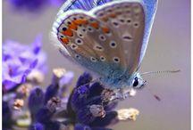 BORBOLETAS / O segredo é não correr atrás das borboletas… É cuidar do jardim para que elas venham até você. No final das contas, você vai achar, não quem você estava procurando, mas quem estava procurando por você! Mario Quintana