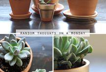Plant/Garden