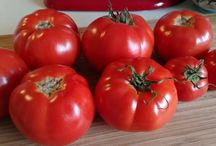 Vegetable gardening / Gardening and growing vegetables in cold climate.