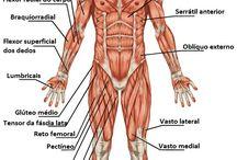anatomia estudo