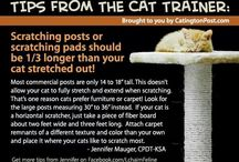 Cat Training Tips for The Catington Post