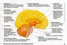 Brain :)