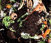 Composting / by Allison Leo