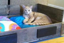 Pallet Cat House / DIY pallet cat house and diy pallet cats bed ideas.