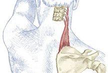 ZDRAVIE-rehab, elixiry