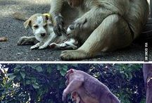 Animaux-animaux