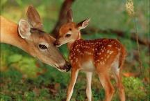 wildlife love / by Sam Bertie