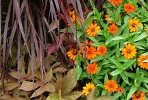 Color: Orange to Bronze Combinations / Plant partnerships that include orange, peach, rust, or bronze flowers or foliage