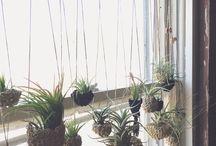 pretty plants / by Alyson Lopez