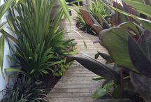 Gardens small narrow section tropical