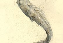 Illustration / Jean-Baptiste Monge