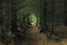 08. Bomen ❤️ Trees - Forrest