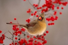 Birds / A collection of wonderful photographs of beautiful birds.