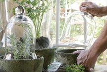 Hagetips / Planter/urter