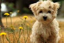 Puppies and Dogs / by Christy Cagle