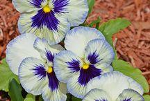 цветы, фото