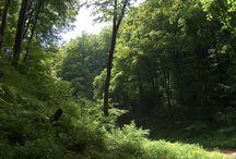 Bakonybél erdő
