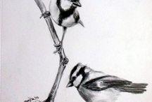Animals / pencil  drawings