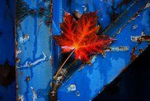 moodboard - blue orange