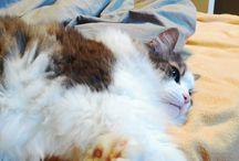 coco cat