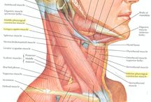 Muscles of the head and neck