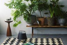 Nature inside, indoor garden