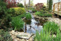 Water Gardens / by Gretchen Everman