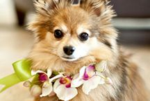 Dogs in weddings / Cute photo shootings of dogs starring at weddings! We love this board!