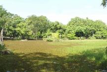 Parque Zoobotânico de Teresina – Piauí - Brasil