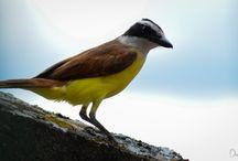 Aves de Santander