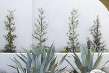 Garden Studio - Garden