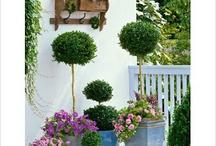 Plantas, árboles y arbustos