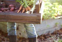 Farm - Kertészkedés