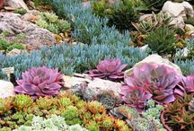 Outdoor Gardening dreams / by Crysta Icore