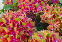 Flore exterior