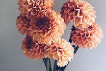 Flowerna Instagram