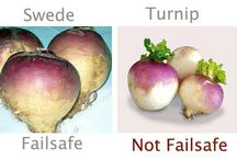Failsafe Diet Ingredients / Failsafe refers to foods that are Free of Additives and Low in Salicylates, Amines, Glutamates and Flavour Enhancers