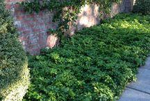 Wejd inspiracje ogrodowe / rośliny, o których rozmawialiśmy w użyciu