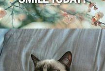 Grumpy & pusheen cat :3