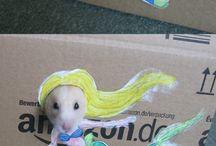 Karas hamster