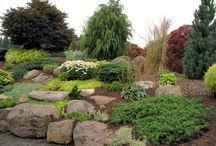 alpine garden ideas